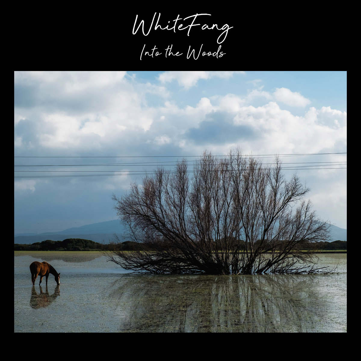WhiteFang - Into The Woods - Luca Cadeddu Palmas - Talk About Records - Bandcamp - 2021 - Sa Scena - 15 gennaio 2021